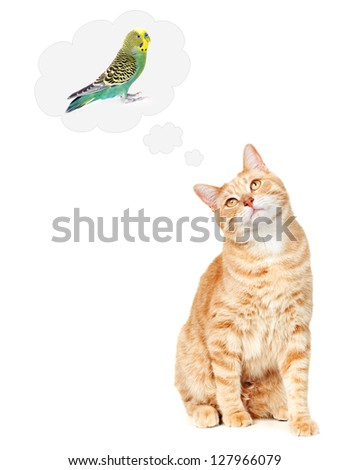 Ginger Cat thinking about bird isolated on white background.