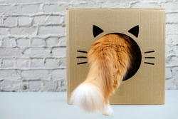 Ginger cat with big tail going in funny cardboard box on grey brick wall background, copy space.