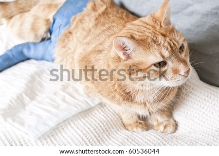Cat Leg Broken http://www.shutterstock.com/pic-60536044/stock-photo-ginger-cat-with-broken-leg.html