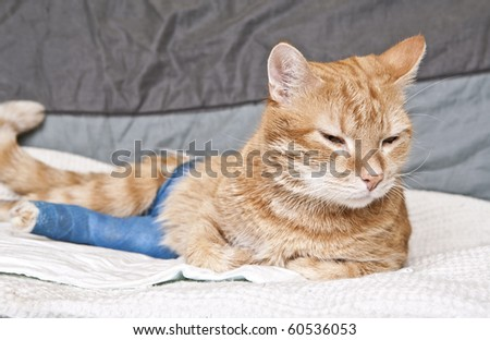 Cat Leg Broken http://www.shutterstock.com/pic-60536053/stock-photo-ginger-cat-with-broken-leg.html