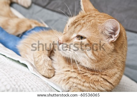 Cat Leg Broken http://www.shutterstock.com/pic-60536065/stock-photo-ginger-cat-with-broken-leg.html