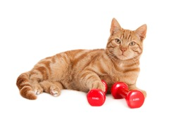 Ginger cat with one paw resting on dumbbell, isolated on white