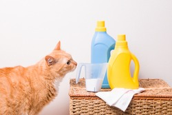 ginger cute cat sniffs detergent in a measuring cup with a pen, children's socks, washable gel and fabric softener on a wicker basket, light background copy space, wash safe concept