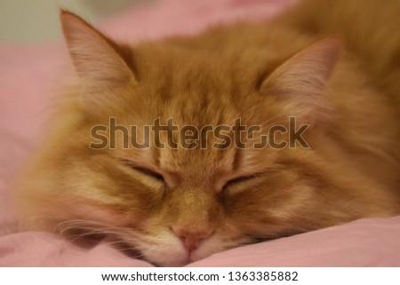 Ginger fluffy cat  #1363385882