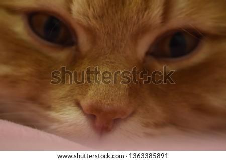 Ginger fluffy cat  #1363385891
