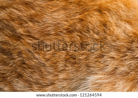 ginger fur background
