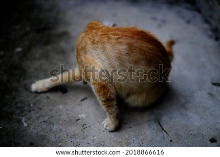 Ginger fur cat cleaning itself. Stock foto ©