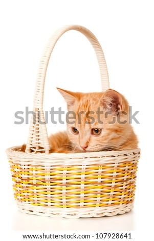 Ginger kitten in a basket isolated, on white