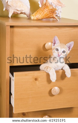 Ginger kitten peeks out of the drawer cabinet