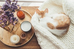 Ginger kitten sleeping on knitted woolen sweater. Wooden tray with home decor near the window. Fall weekend cozy and hygge concept.