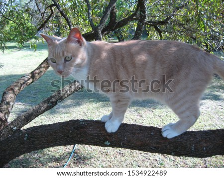 Ginger kitty balances perfectly in a tree.