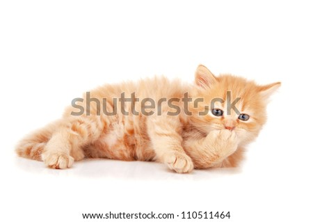 ginger kitty isolated on a white background