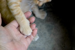Ginger kitty paw on human palm. Tame kitty. She willing give a hand to human.