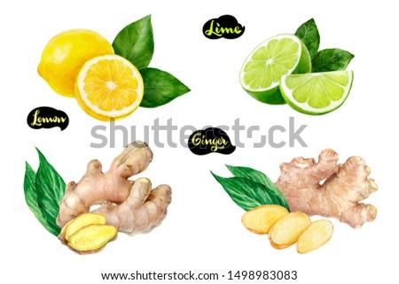 Ginger lemon lime set watercolor isolated on white background