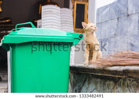 Ginger stray cat looking at something with upturned eyes