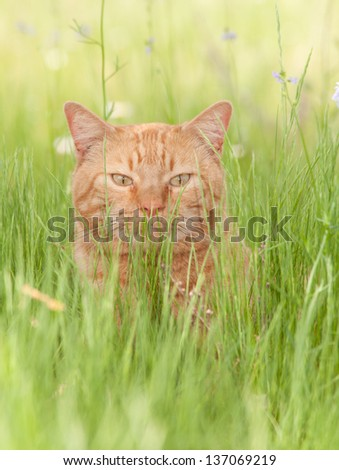 Ginger tabby cat enjoying a shady spot in lush spring grass