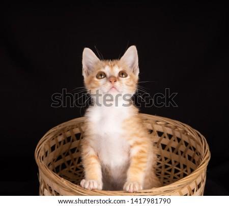 Ginger tom cat inside a basket inside a basket