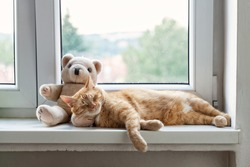Ginger Tomcat Sleeping In The Window With Teddy Bear