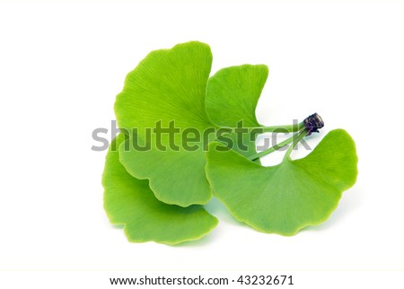 ginkgo leaf isolated