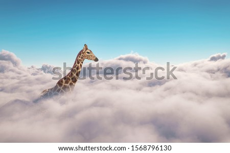 Giraffe above clouds . This is a 3d illustration Foto d'archivio ©