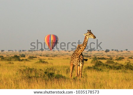 Giraffe and balloon