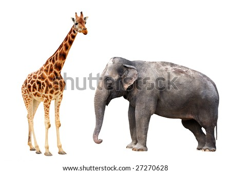 Giraffe and elephant isolated
