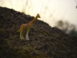 giraffe animal toy isolated around stone rock at forest blur background