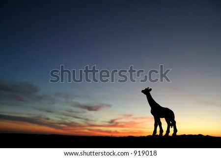 giraffe at sunset (image contains some noise)