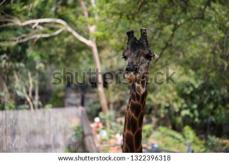 giraffe  Giraffe in the zoo  nature #1322396318