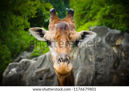 giraffe,giraffe standing in the park with green tree background. #1176679801