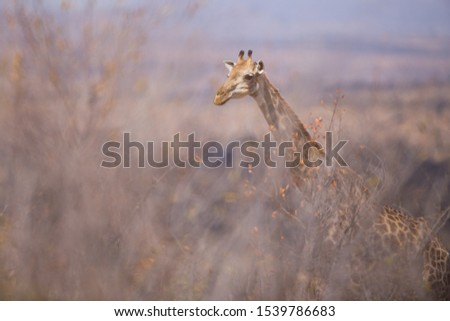 Giraffe in a Painting Style background of the Grasslands of Africa #1539786683
