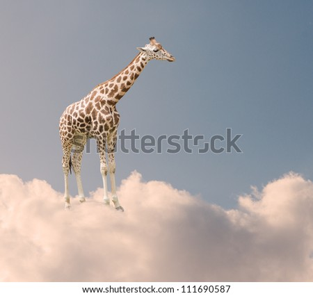 Giraffe In Clouds, Outdoor