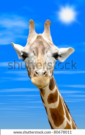 Giraffe neck against blue sky background and brilliant sun