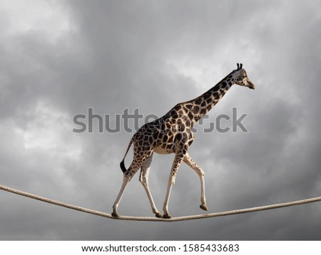 Giraffe walking on rope with stormy clouds. Risk and balancing