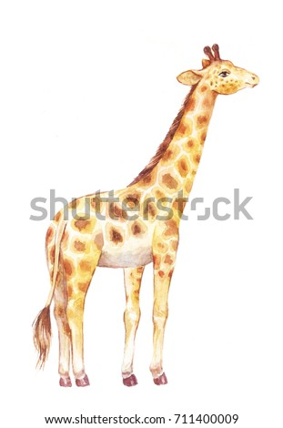 giraffe watercolor illustration, cute animal isolated on white
