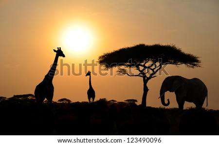 Giraffes and Elephant Silhouettes with Acacia tree with Sunset on Safari in Serengeti National Park in Tanzania - Africa