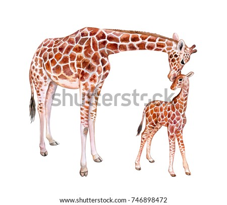 Giraffes. Mum with baby isolated on white background. Motherhood. Childhood. Watercolor. Illustration. Template. Clip-Art. Handmade