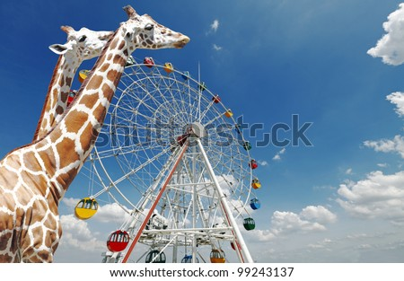 Giraffes walking past a ferris wheel in an amusement carnival against a blue sky with clouds.