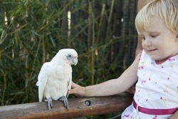 girl and a bif white Parrot