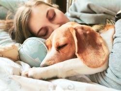 Girl and beagle dog sleep together. Girl hugs a dog. Home pet. Love.