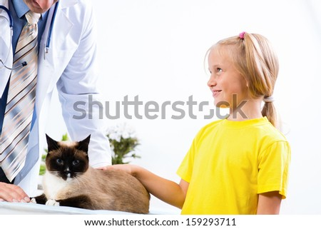 girl brought the cat to the veterinarian, the veterinarian examines a cat