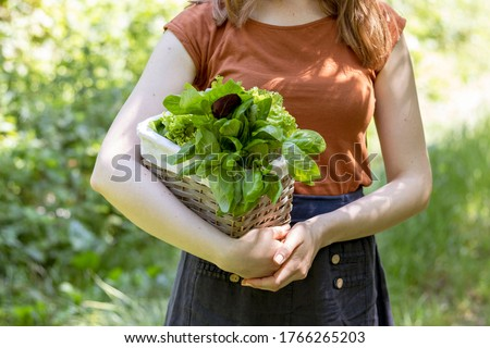 Girl carries from the garden a wicker basket with salad and basil. Close up. Сток-фото ©
