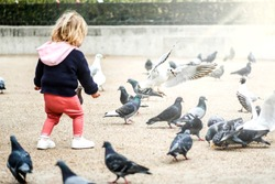Girl child or small kid feeding pigeons at town square of Paris. Seagull flying over pigeons in back light.