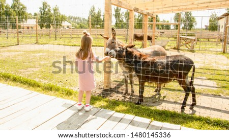 Girl, donkeys, animals, farm, zoo, mule, travel, vacation, village, wild animals, herd of donkeys, feed animals, girl feed donkeys, child feed animals, little girl feed donkeys, tourism