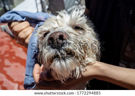 girl drying a dog with a towel