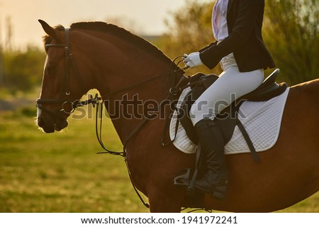 Girl equestrian rider riding a beautiful horse  in the rays of the setting sun. Horse theme Сток-фото ©