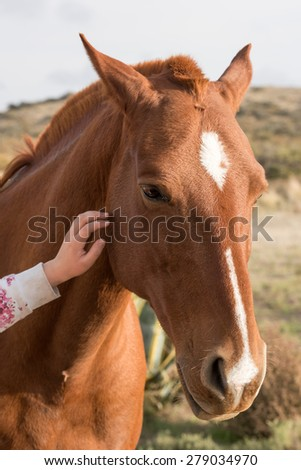 girl hand caressing horse detail #279034970