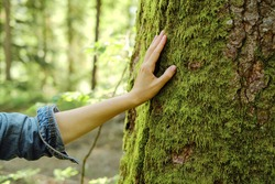 Girl hand touches a tree with moss in the wild forest. Forest ecology. Wild nature, wild life. Earth Day. Traveler girl in a beautiful green forest. Conservation, ecology, environment concept
