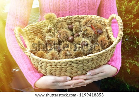 Girl holding a basket full of autumn chestnuts and leaves #1199418853