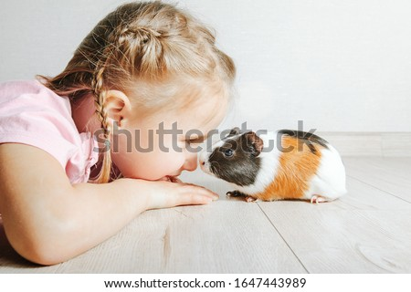 girl holding a guinea pig in her arms, on a black background. a lot of joy and fun Сток-фото ©